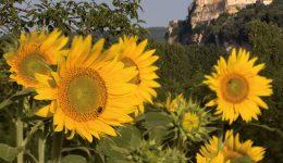 Sunflowers Prayer Card - 30p each