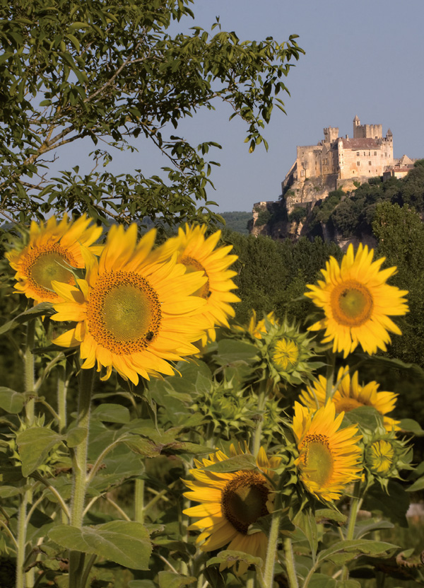 Prayer Card – Sunflowers
