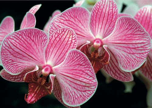 All Occasion Card – 2008 – Orchid